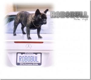 robobullmain